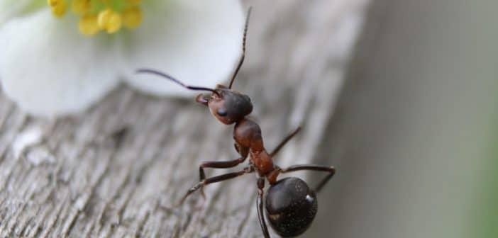 Pourquoi avoir une fourmilière chez soi?