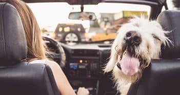 Quels matériels pour le transport d'un chien?