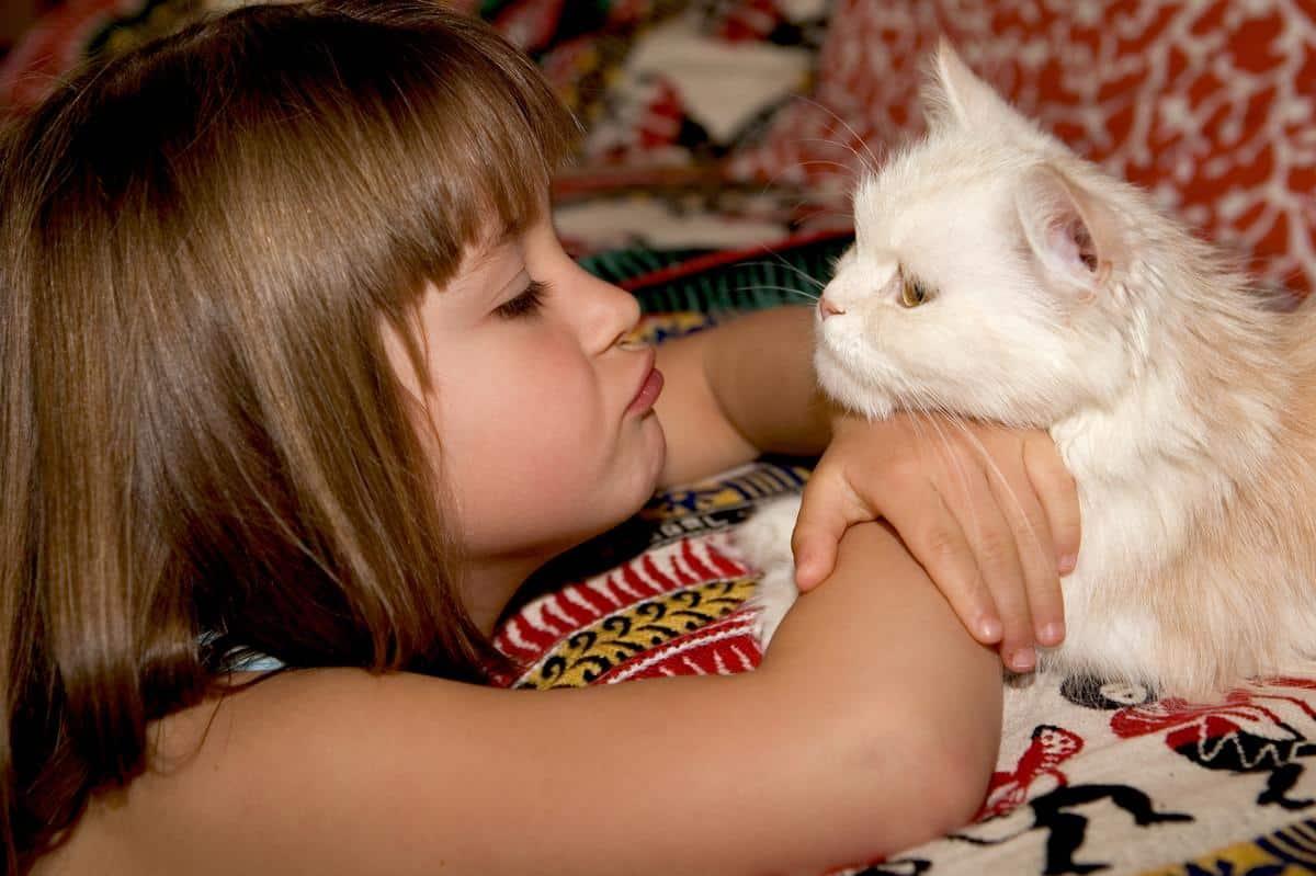 Un chat de compagnie avec un enfant