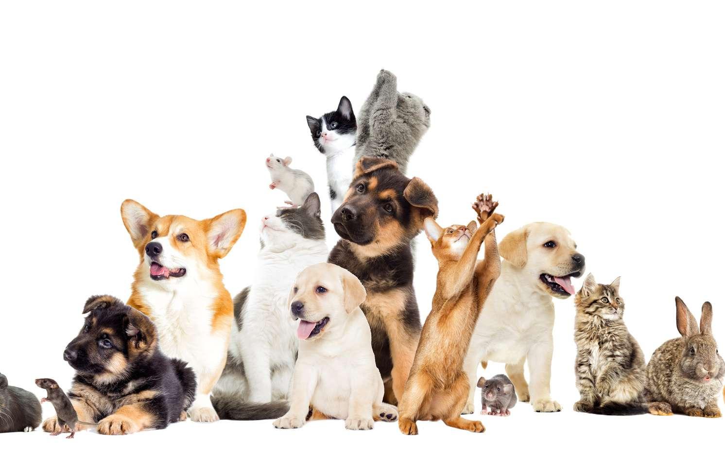 Vos options pour choisir un animal de compagnie