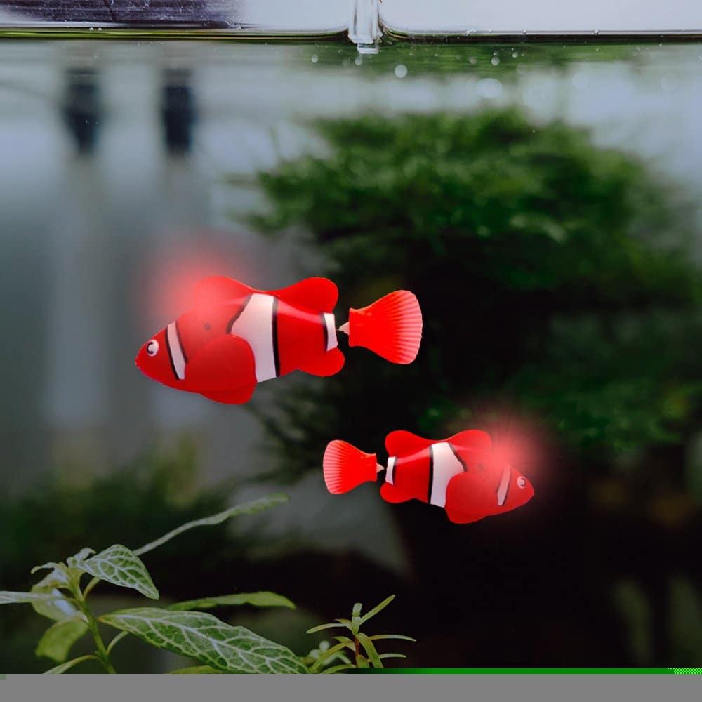 Deux poissons de compagnie rouge