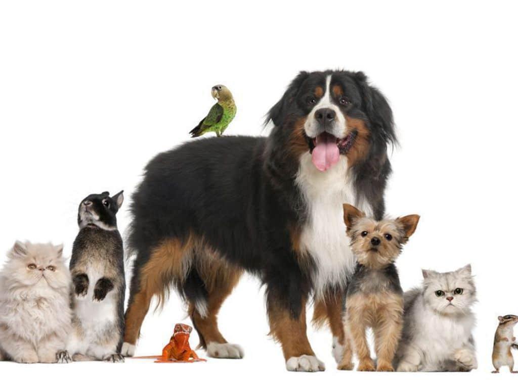 Différents choix d'animal de compagnie