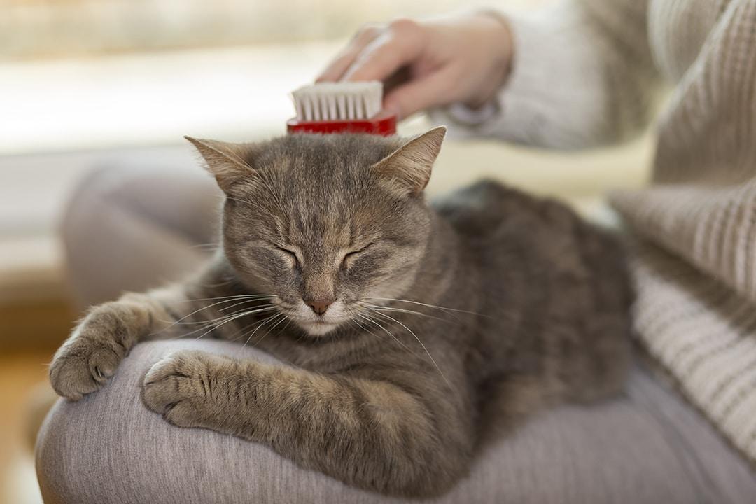 pelage de son chat