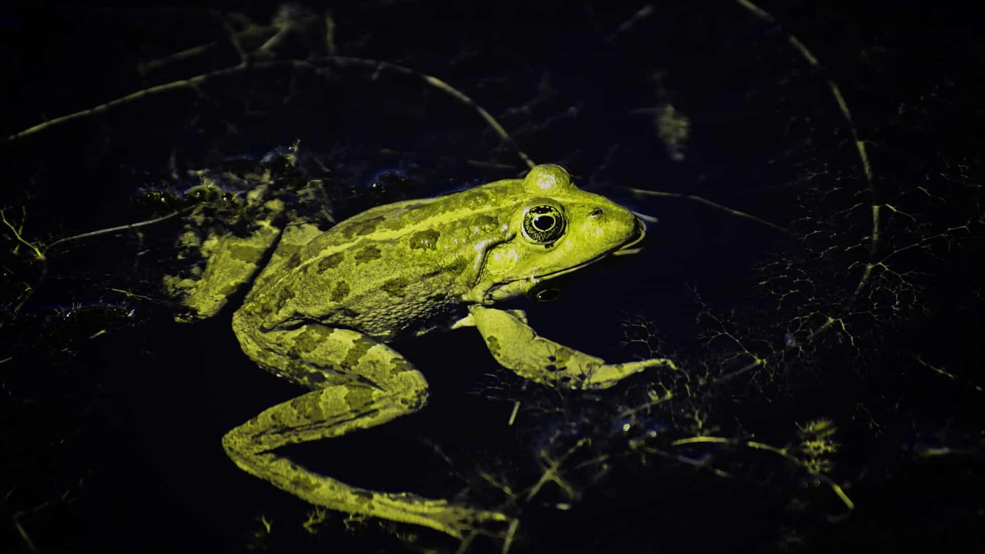 Quelle est la différence entre une grenouille et un crapaud?